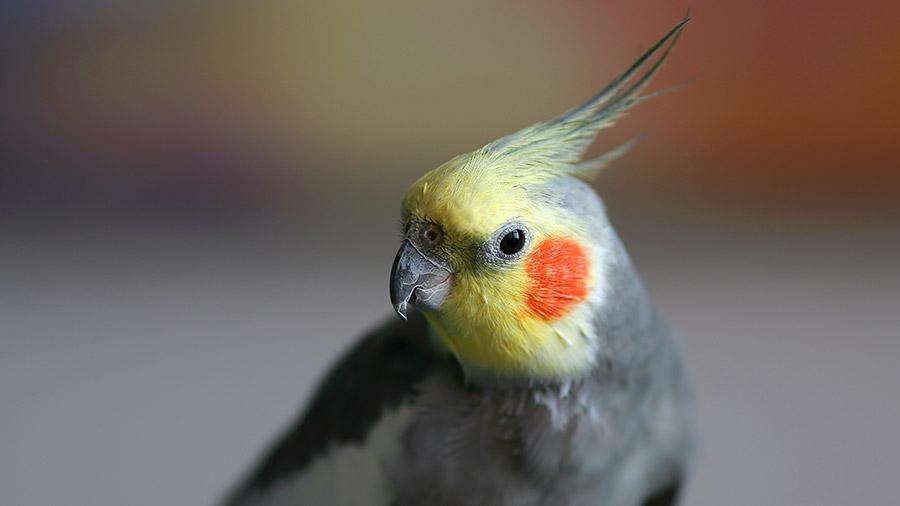 2503_aves_pso_destaque