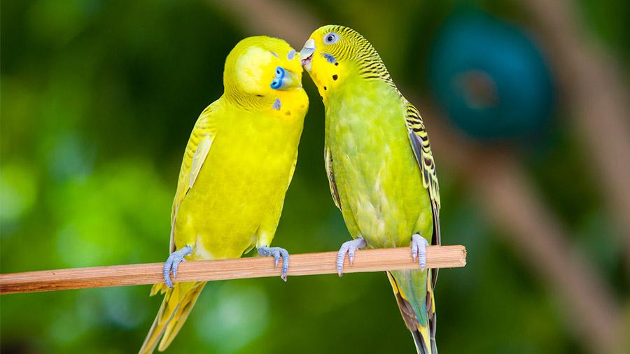 aves_reproducao