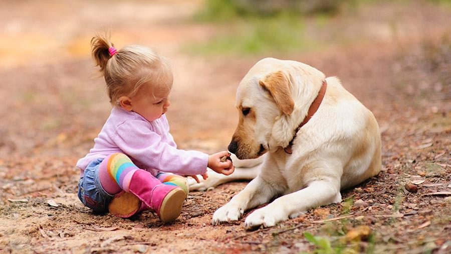 cachorro_crianca_apresentacao