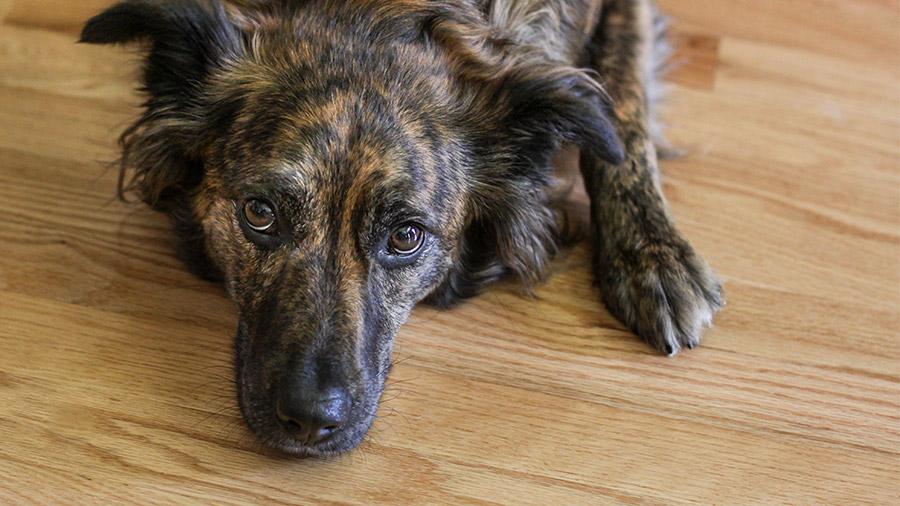 cachorro_terapia