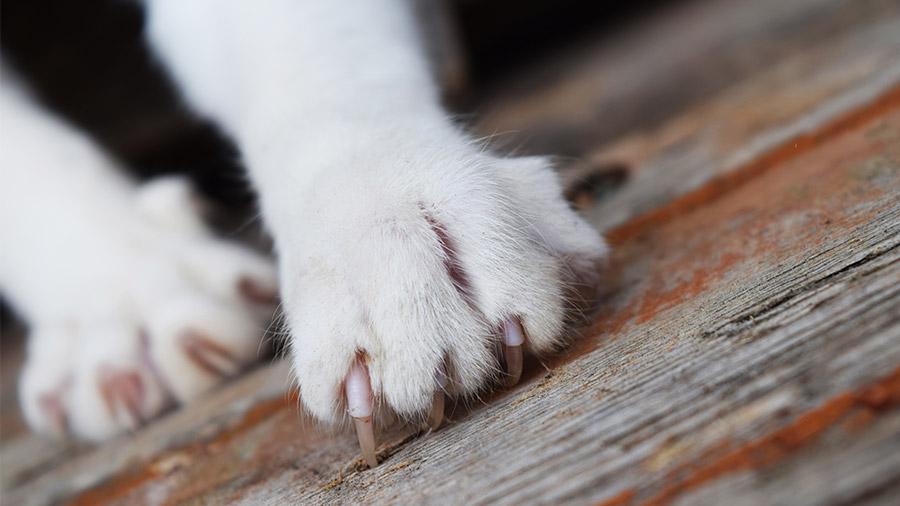 arranhador_gato