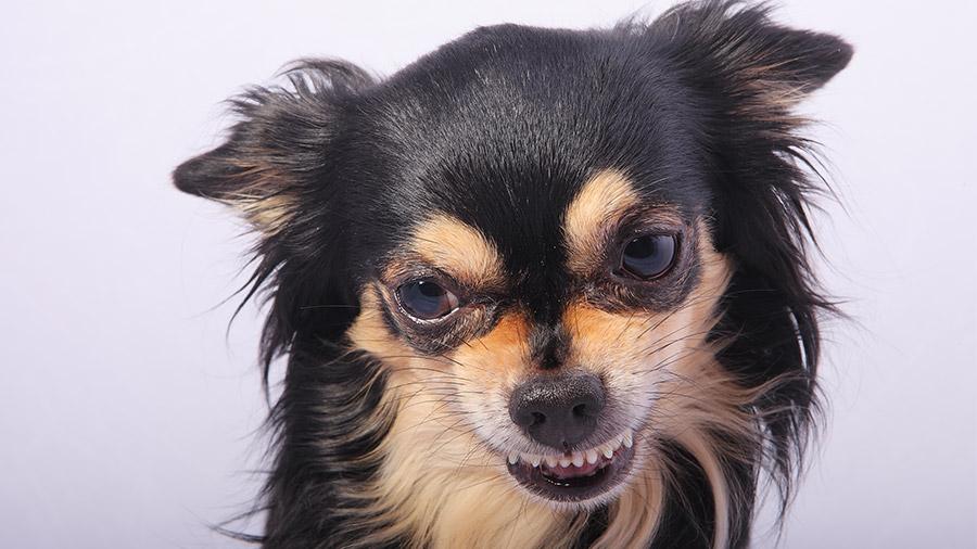 cachorro_ciumento