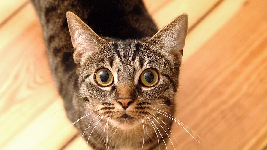 gatos_cuidado_olhos