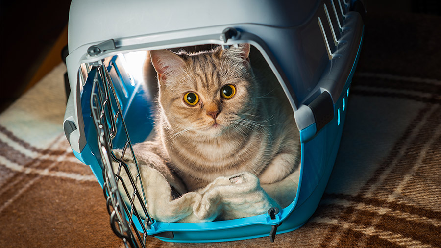 caixa_transporte_animais