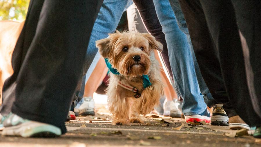 ATEAC: conheça e saiba como você e seu pet podem ajudar