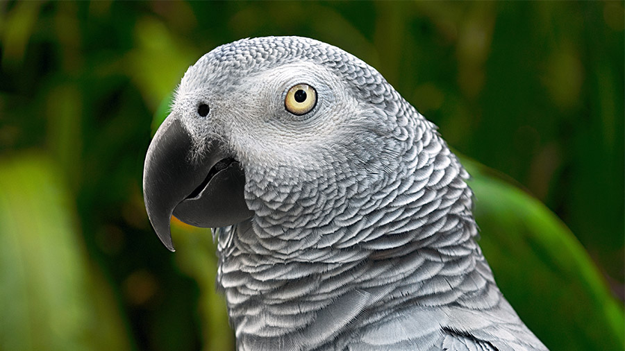 Resultado de imagem para Aves