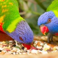 alimentacao_aves