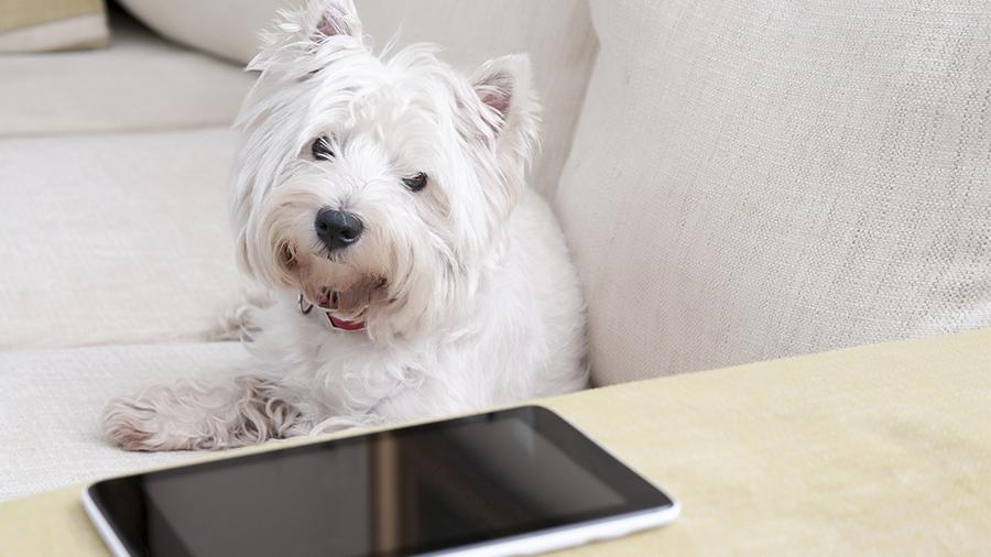 app_cachorro