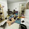 Abrigo da ONG (Foto: Divulgação)