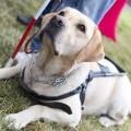 cachorro_assistencia