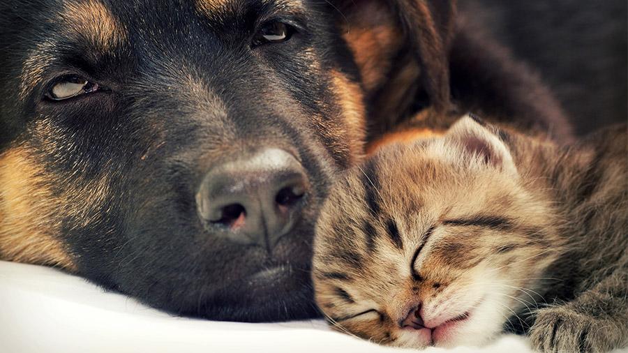 cachorro_gato_harmonia