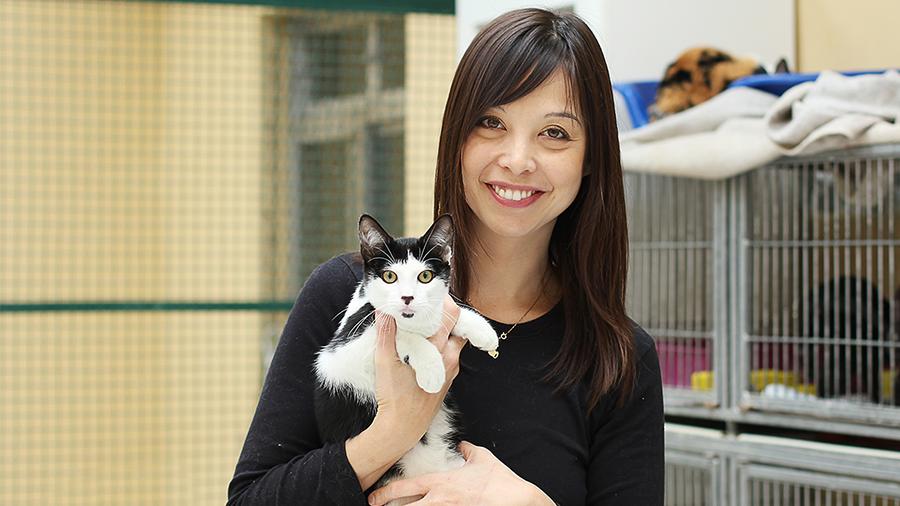 Vida de felino: conheça a ONG Adote Um Gatinho