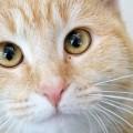 gato_vesgo_estrabico