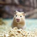 hamster_calor_cuidado
