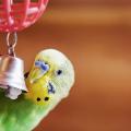 aves_brincam