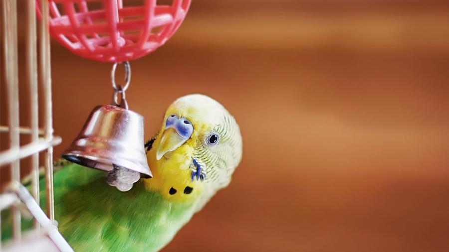 Sabia que as aves também brincam?