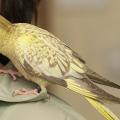 aves_idosos_terapia