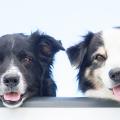 cachorro_felicidade