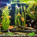 peixe_veterinario