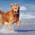 01_cachorro_praia