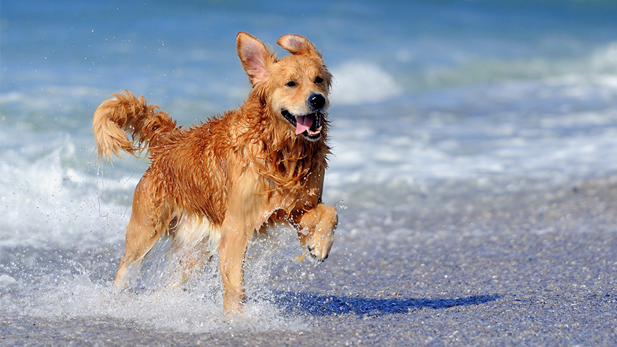 Want to run with your dog? Try Fort Desoto Park beach in St. Pete.