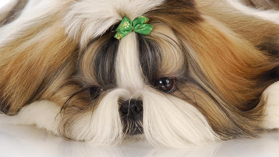 problemas renais em cães