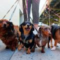 como_passear_com_cachorro