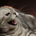 gato_agressividade