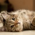 transpiracao_gatos
