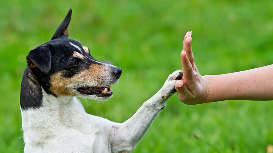 adestramento_cachorro_erros