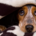 ambiente_seguro_cachorro