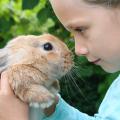 roedores_terapia_criancas