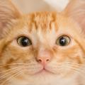 gato_adocao_sp