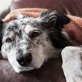 levar_cachorro_veterinario