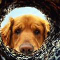 cachorro_enterra_buraco