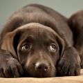 cachorro_medo_barulho