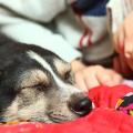 cachorro_parte_familia