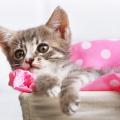 gato_consulta_veterinario