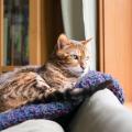 sinais_comportamento_gatos