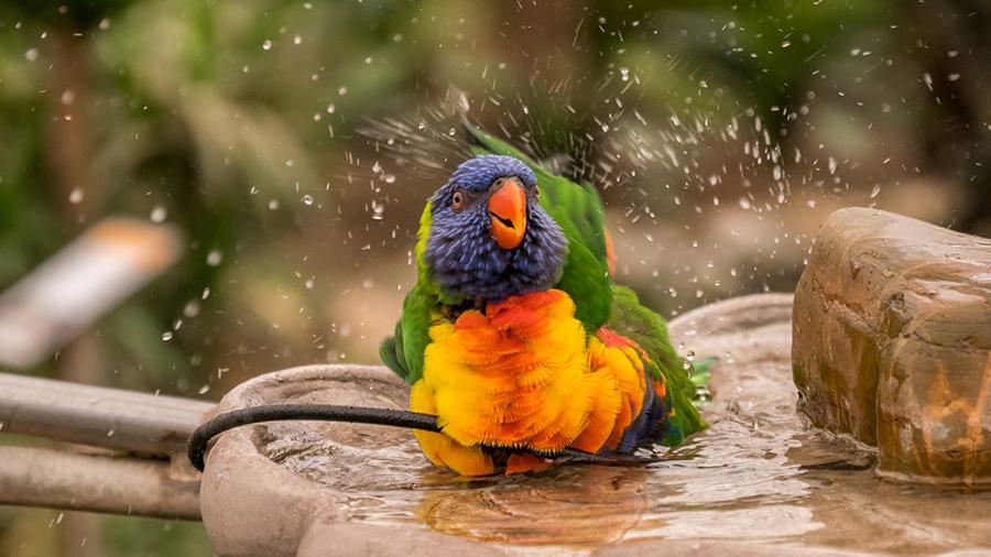 10 motivos para ter uma ave como melhor amiga