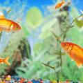 peixe_personalidade