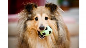 cachorro_brincando_bolinha