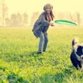 cachorro feliz brincando