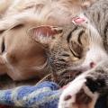cachorro_gato_dormindo