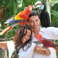 diversas_especieis_aves