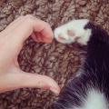 pata gato coracao amor