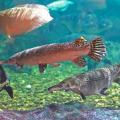 peixes_grandes_aquario