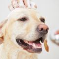 cachorro banho feliz