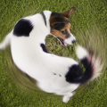 cachorro_correr_rabo