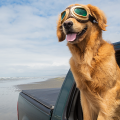 dog carro passeio